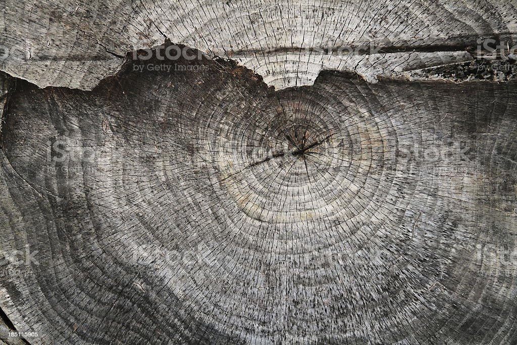 Weathered Tree trunk cut in two levels stock photo