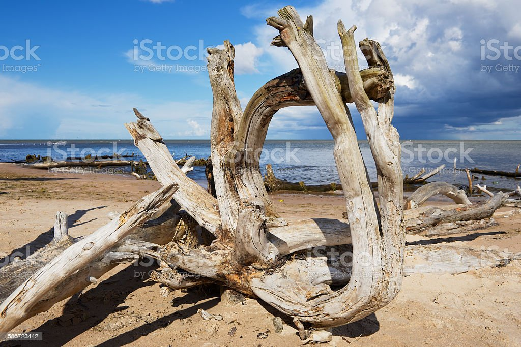 Weathered wood at the sandy beach of the Baltic sea. stock photo