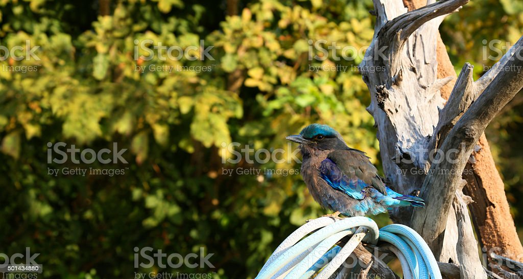 Weaver bird sitting on a Branch royalty-free stock photo
