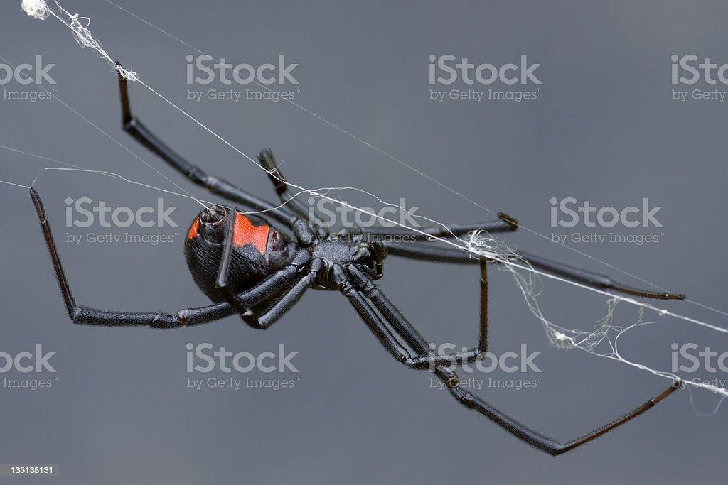 Weaving the Web stock photo