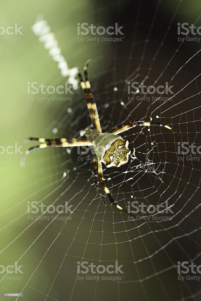 Web and spider stock photo