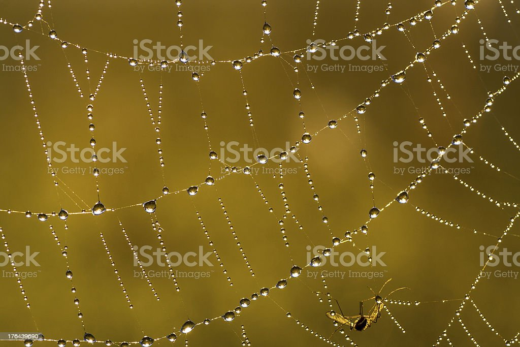 Web in dew and sun rays royalty-free stock photo