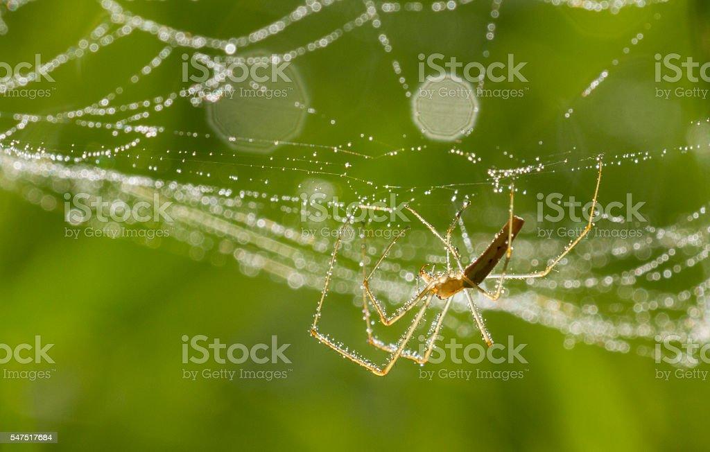 Web making Spider stock photo