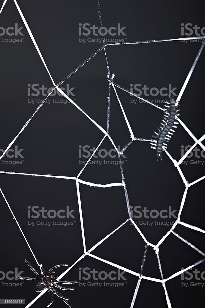 Web of fear royalty-free stock photo