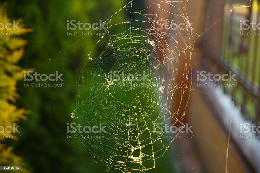 Web. stock photo
