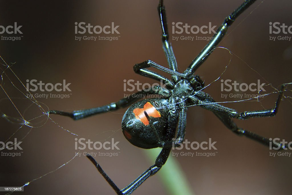 Web Slinger royalty-free stock photo