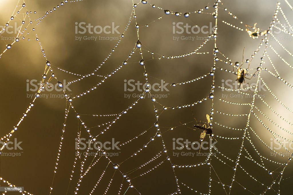 web with dew drops stock photo