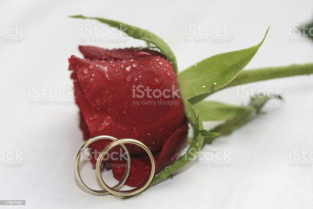 Wedding bands and a red rose royalty-free stock photo
