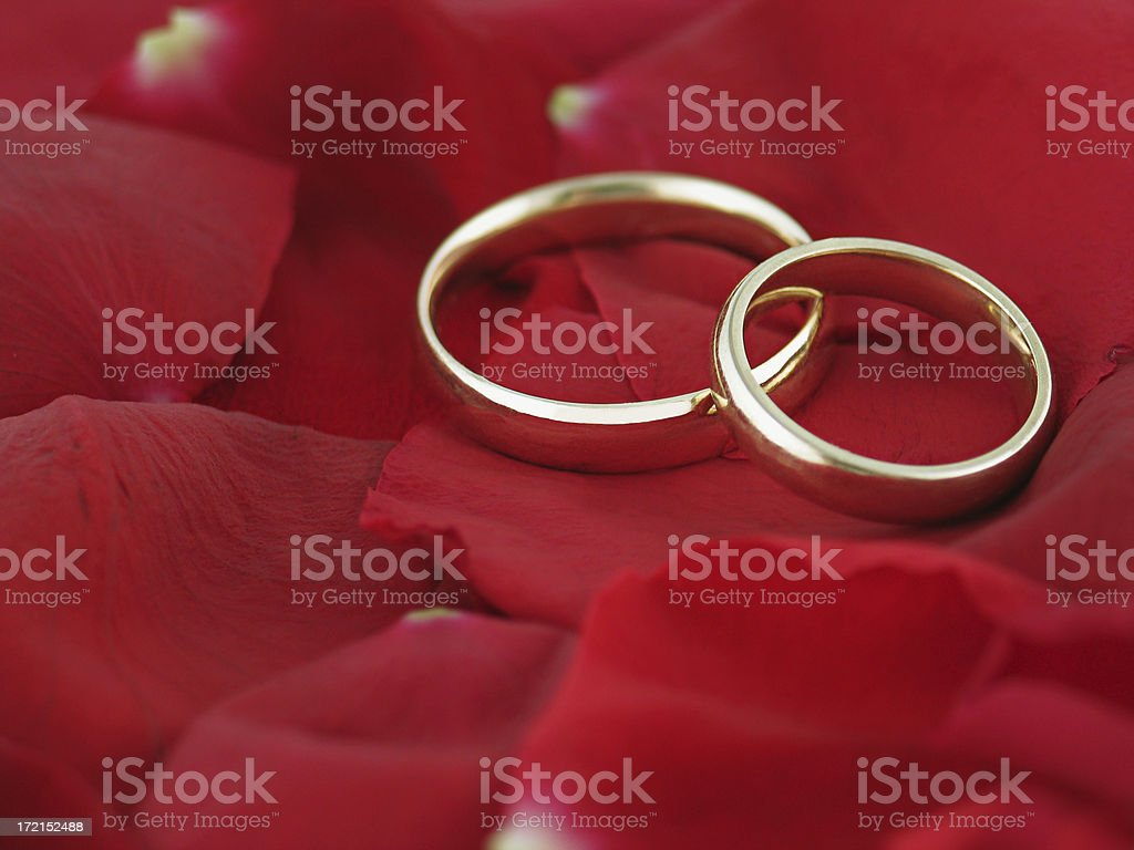Wedding Bands on Rose Petals royalty-free stock photo