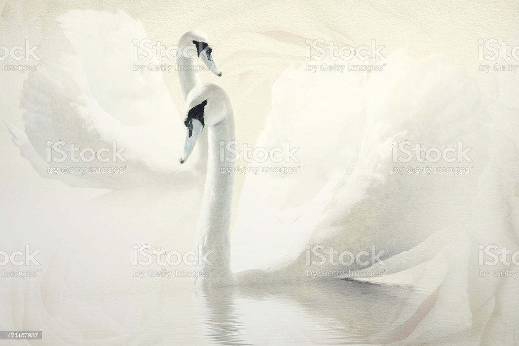 Wedding Card with white swans stock photo