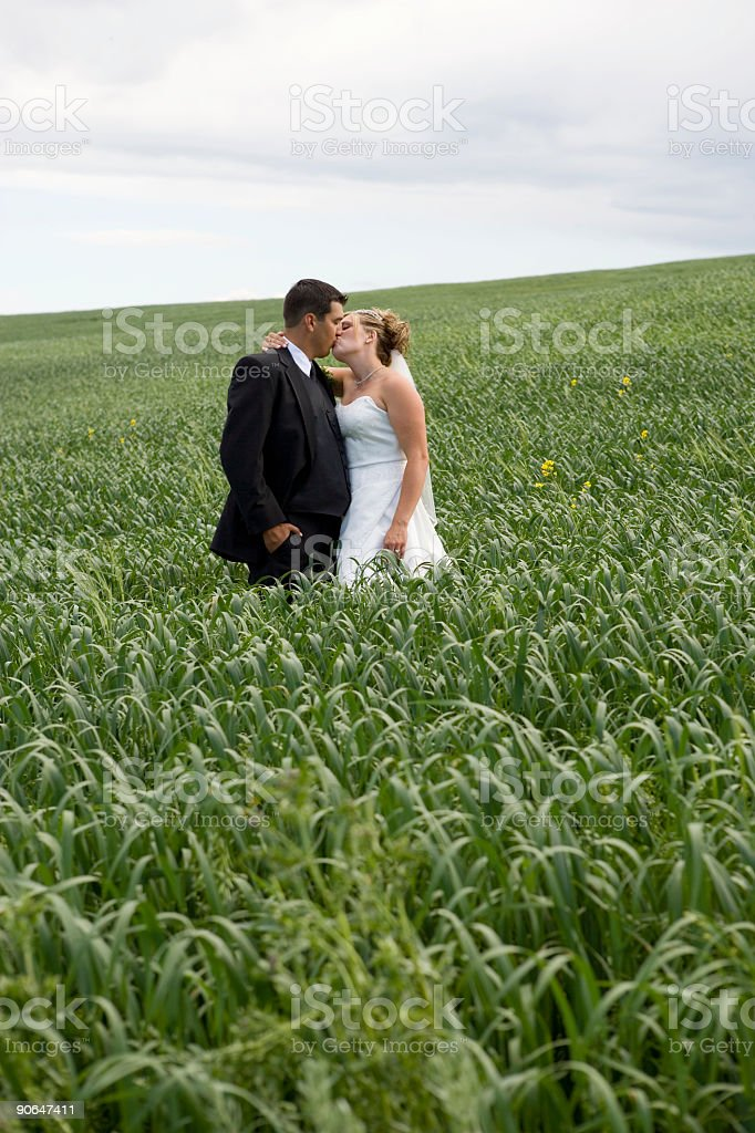 Wedding Day / Kissing royalty-free stock photo