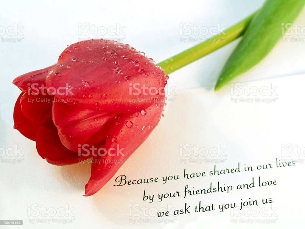 Wedding Invitation and Red Tulip royalty-free stock photo