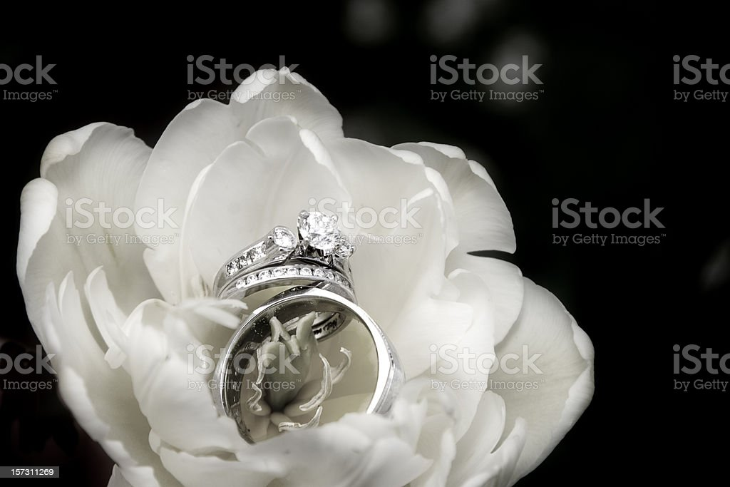 Wedding Rings in a Flower - Black and White royalty-free stock photo