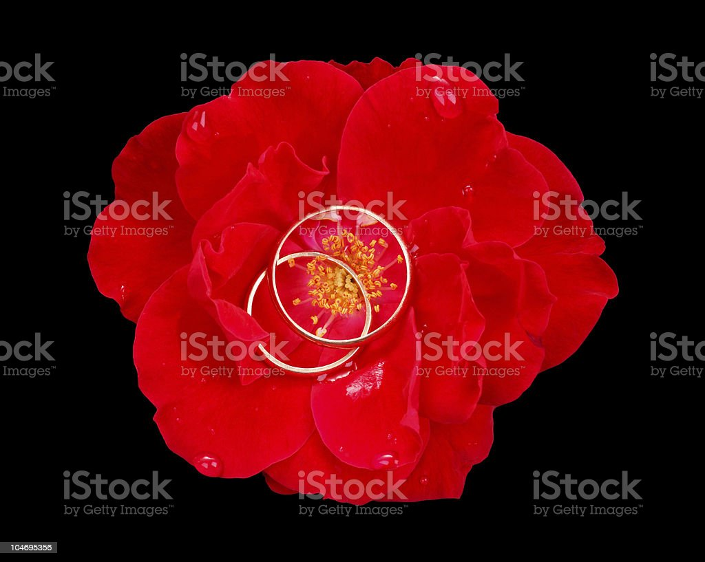 Wedding rings in a red rose royalty-free stock photo