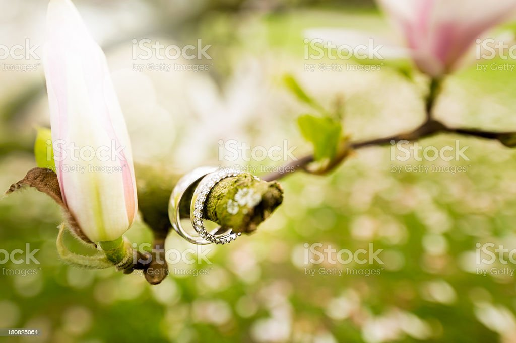 Wedding Rings in magnolia tree royalty-free stock photo