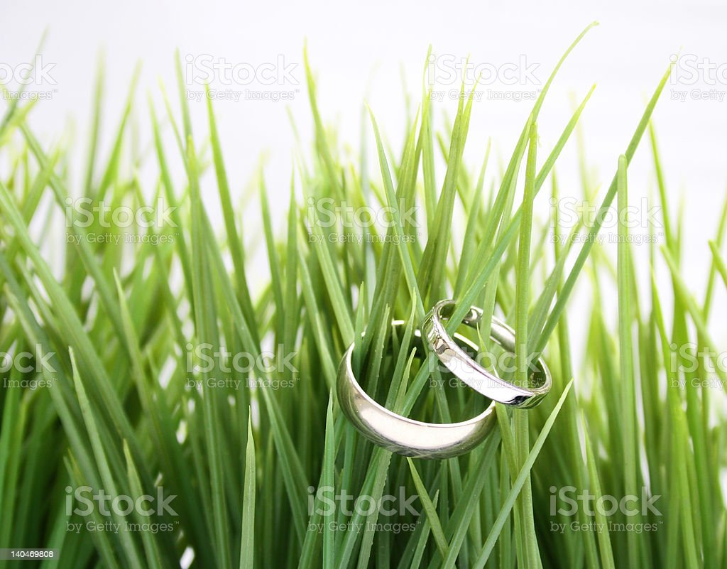 wedding rings in the green grass stock photo