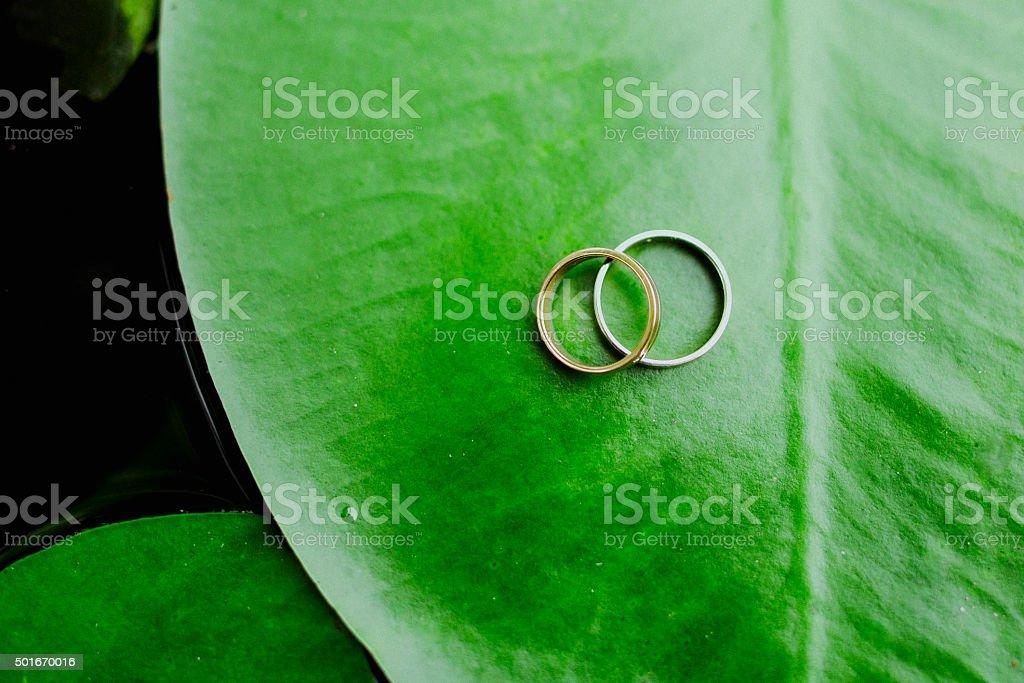 Anillos de boda en un green leaf foto de stock libre de derechos