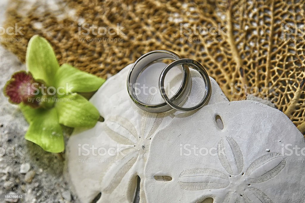 Wedding Rings on a Sand Dollar royalty-free stock photo
