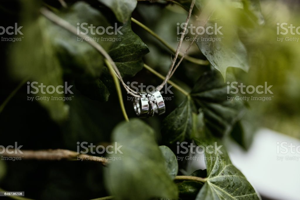 Wedding rings on a strain stock photo