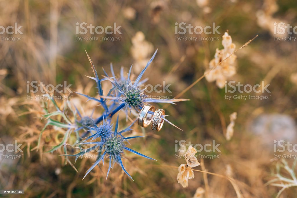Wedding rings on sea holly flowers stock photo