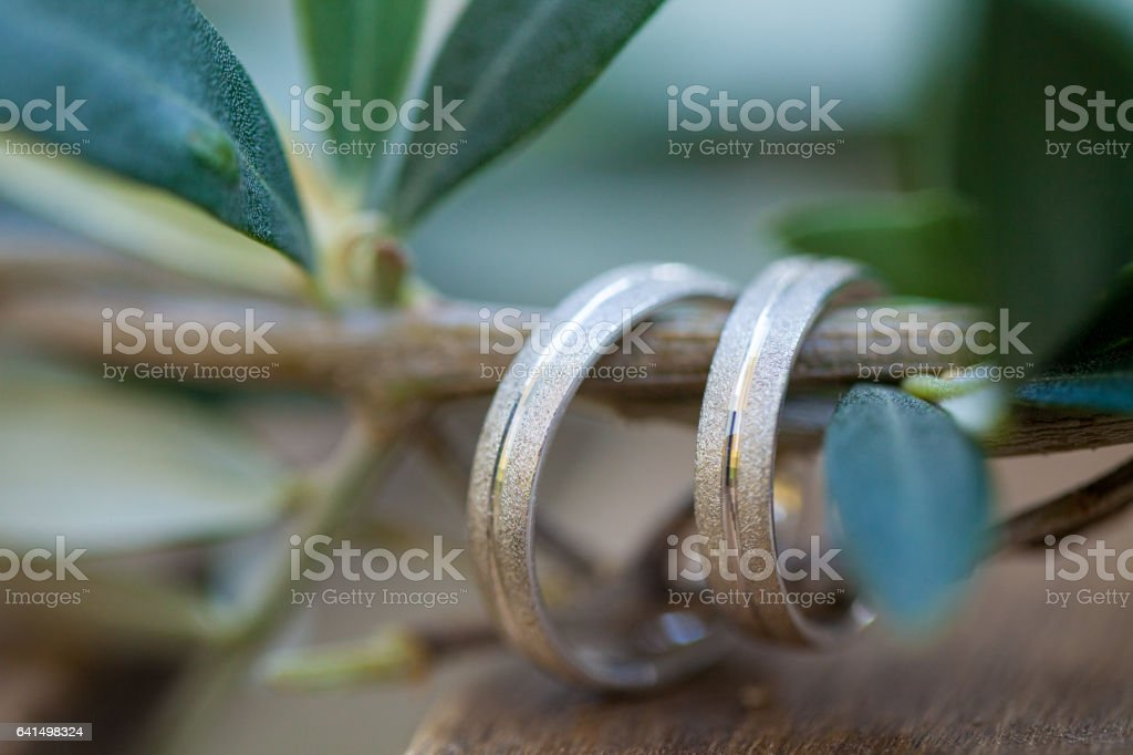 Wedding rings on the olive tree branch stock photo