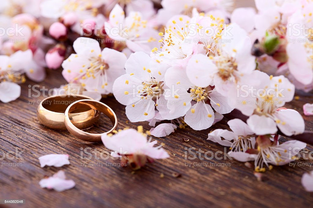 Wedding rings. Spring. Flowering branch on wooden surface. stock photo