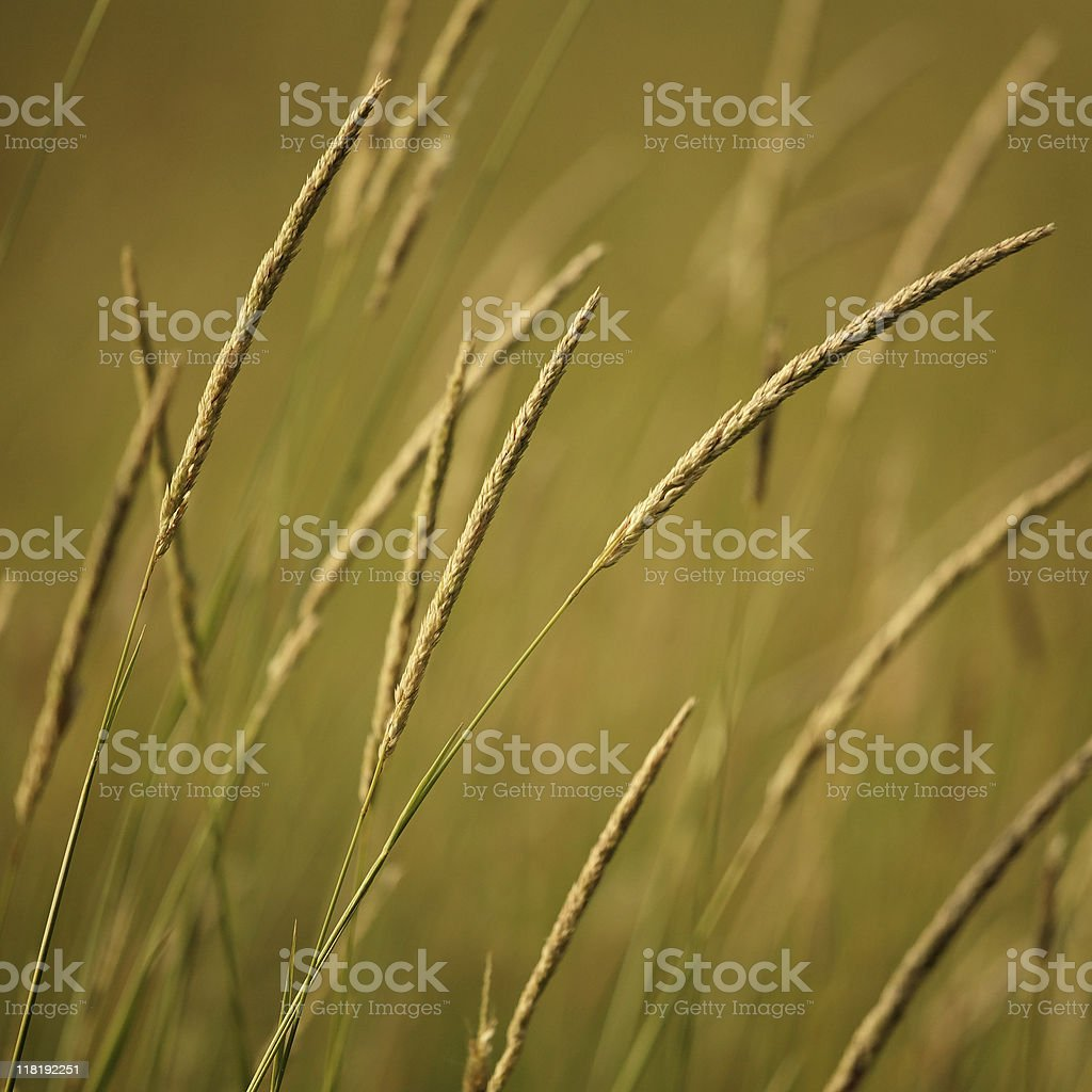 weed abstract royalty-free stock photo
