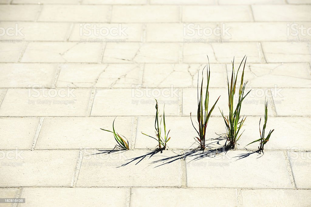 Weed breaks through tiled concrete royalty-free stock photo
