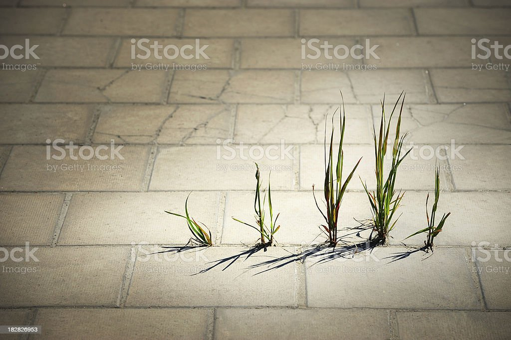 Weed breaks through tiled concrete stock photo