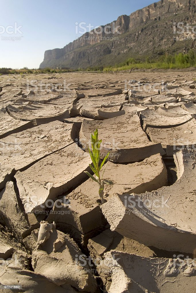 Weed Growing in Cracked Mud royalty-free stock photo