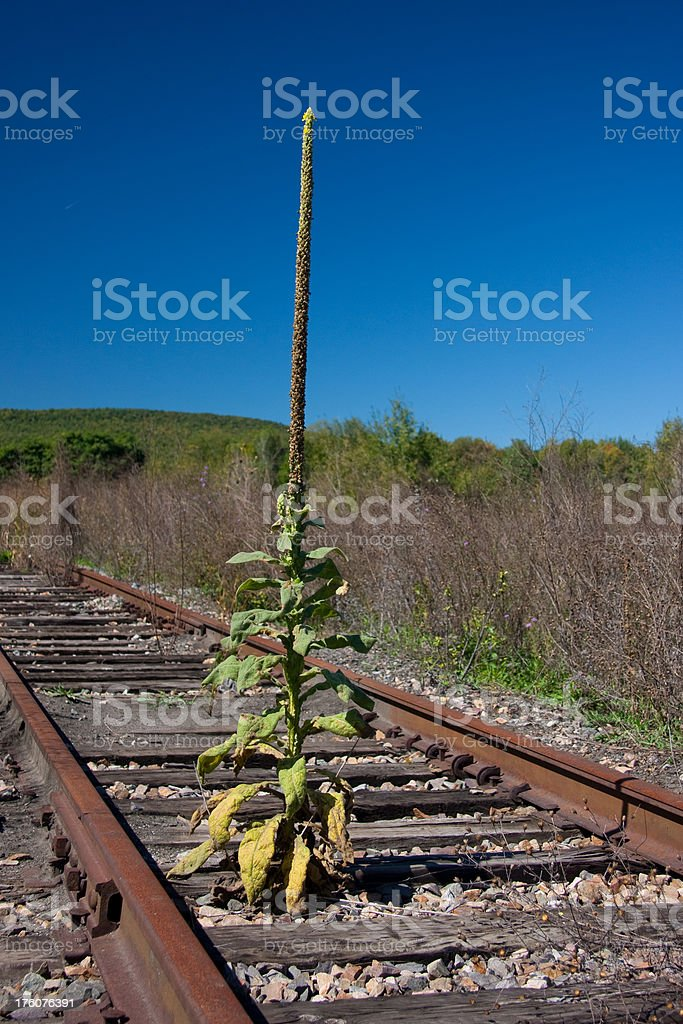 Weed on the Tracks stock photo