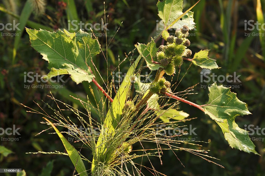 Weed within weeds. stock photo