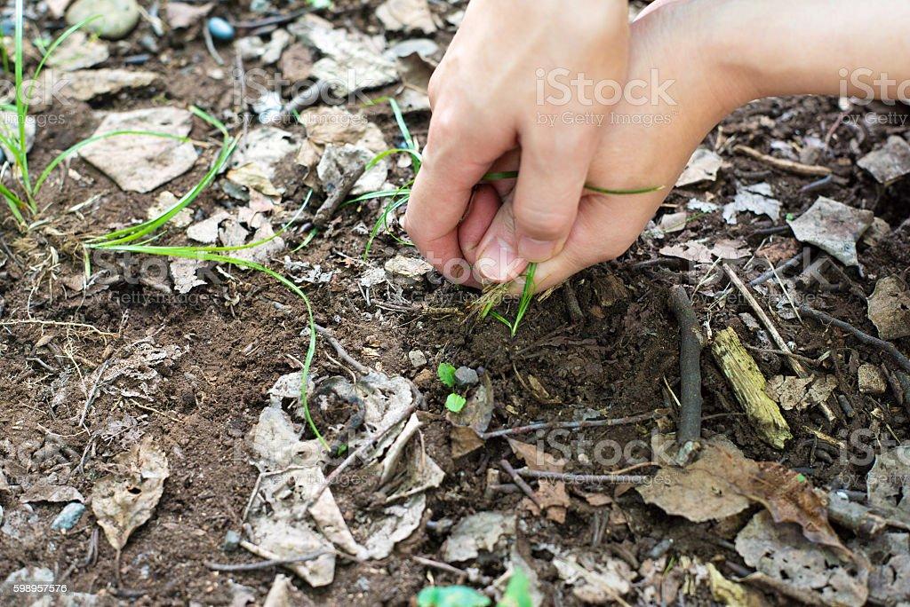 Weeding stock photo