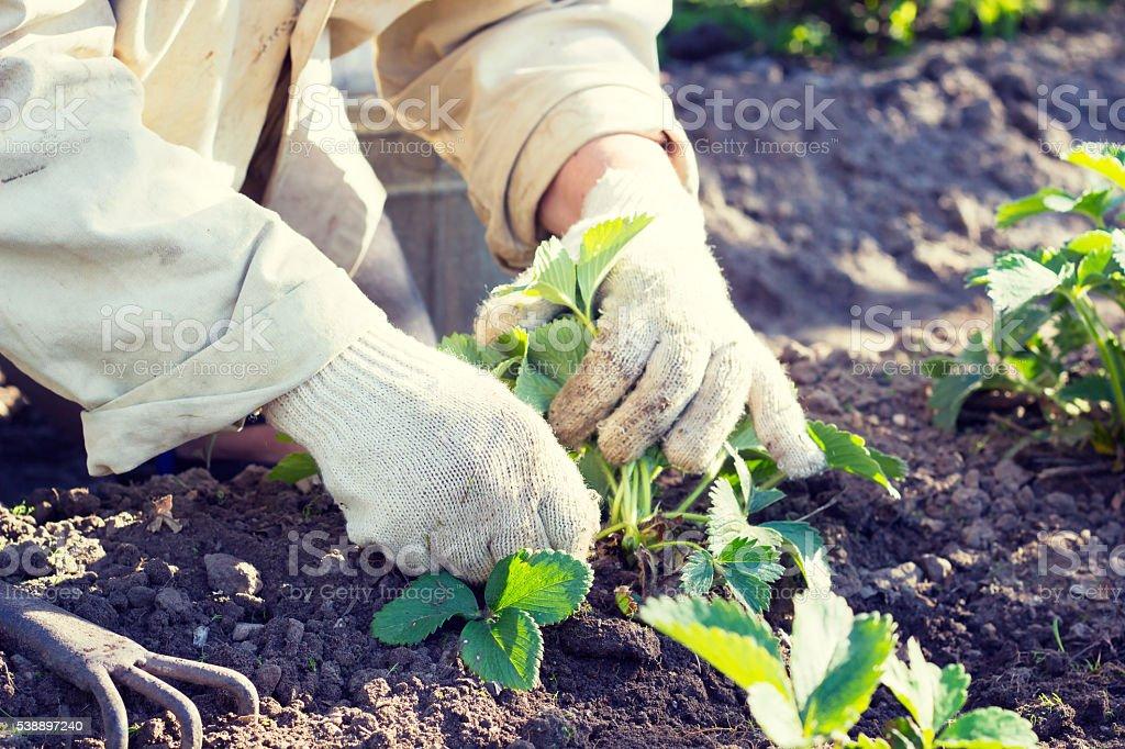 Weeding the grass in the garden stock photo
