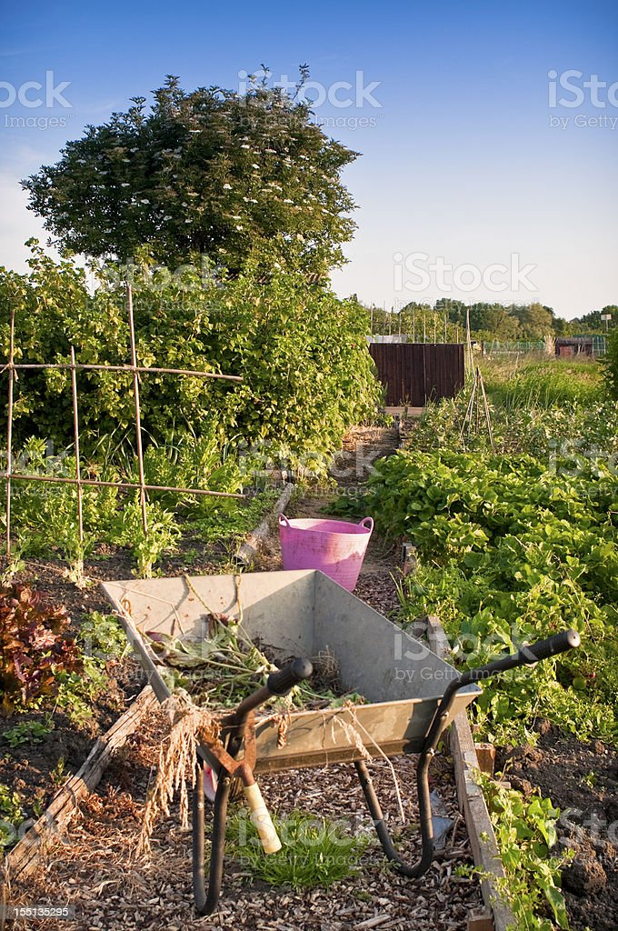Weeding with wheelbarrow in allottment at sunset. royalty-free stock photo