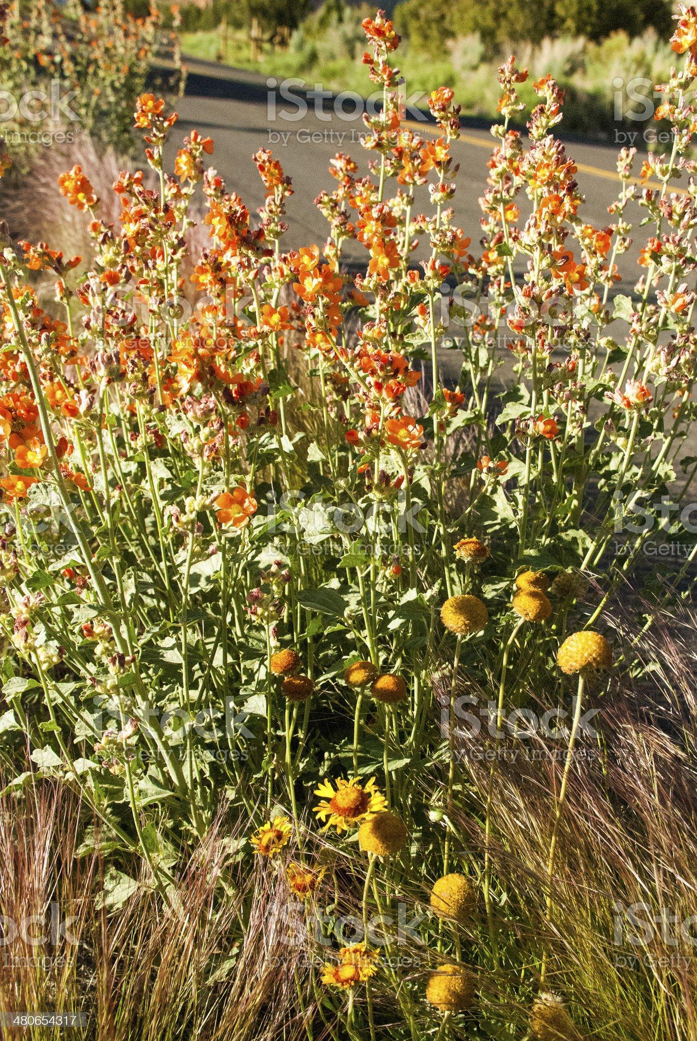 Weeds and Wildflowers Kodachrome Basin State Park Utah royalty-free stock photo
