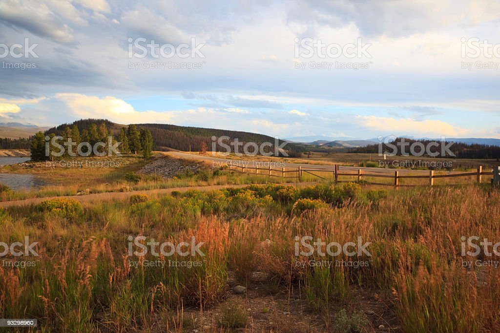 Weeds field royalty-free stock photo