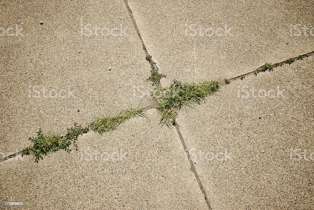 Weeds in the Cracks royalty-free stock photo