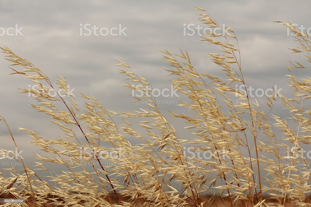 Weeds in the field stock photo