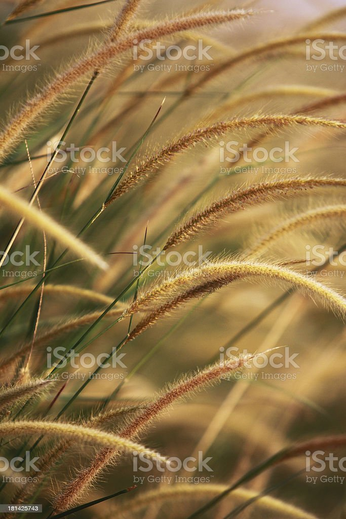 weeds royalty-free stock photo