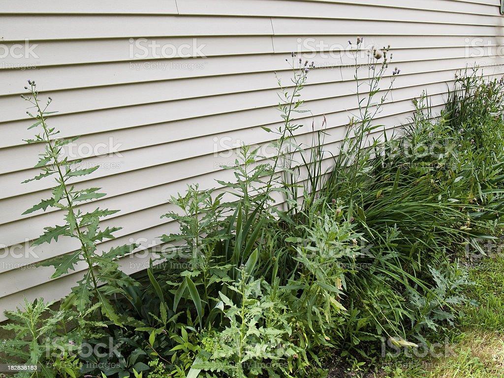 Weeds stock photo