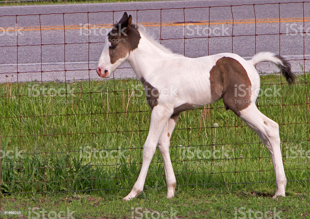 Week Old Paint stock photo