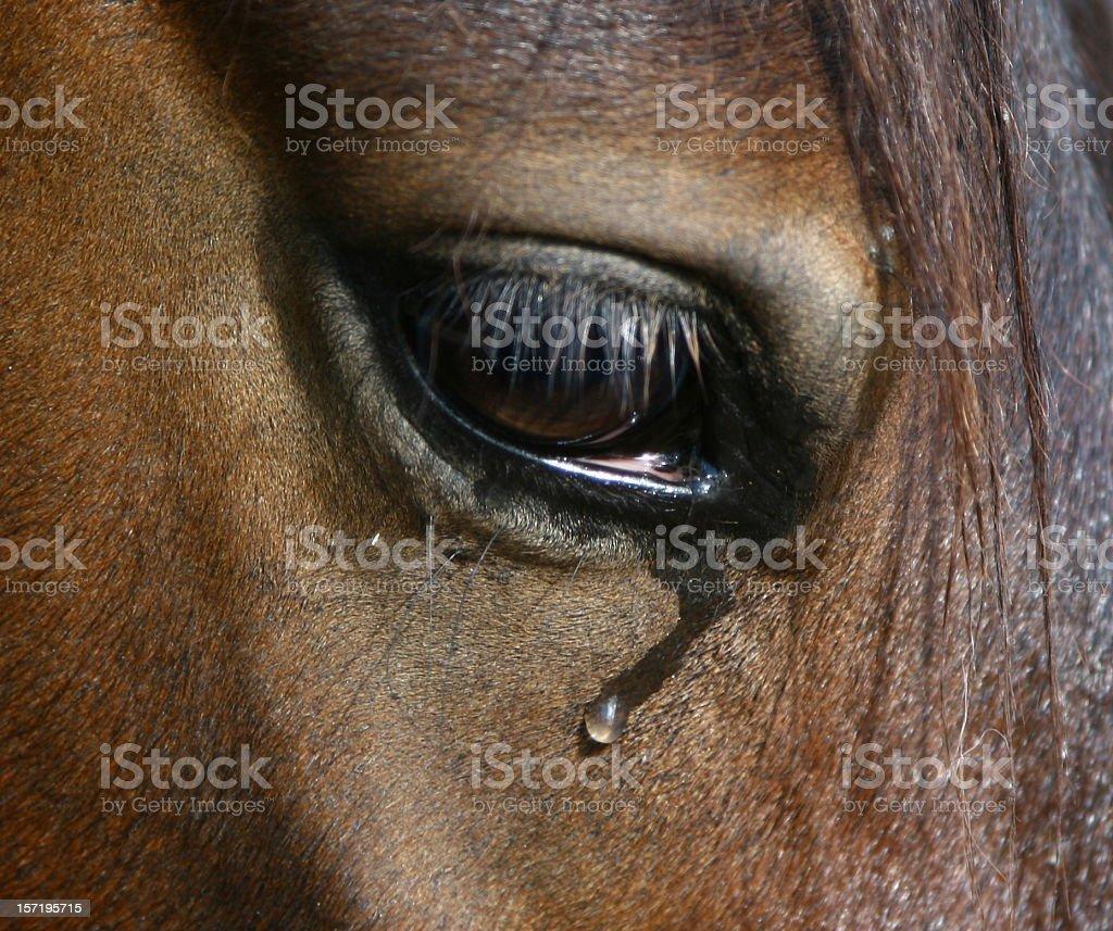Weeping Horse Eye stock photo