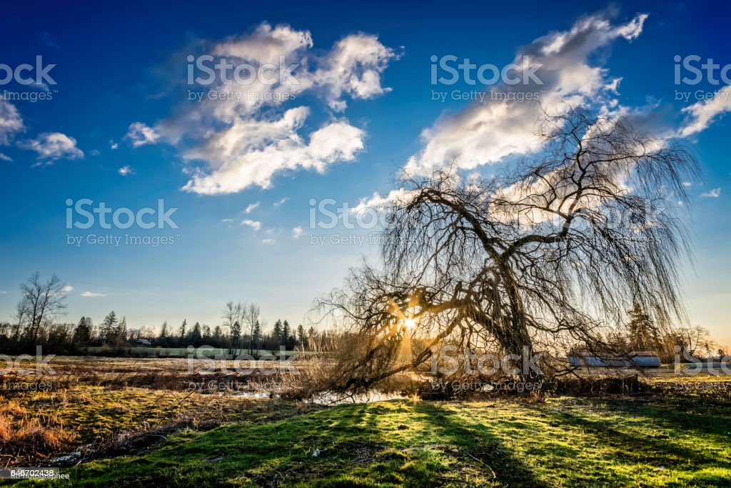 Weeping Sunset stock photo