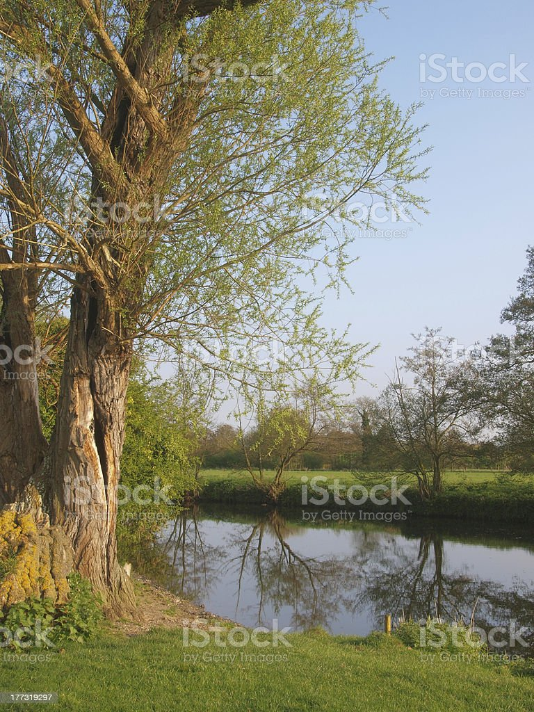 Weeping Willow Tree By A River royalty-free stock photo