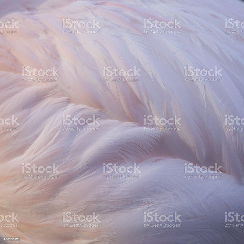 weiche flauschige Federn eines Rosaflamingo royalty-free stock photo