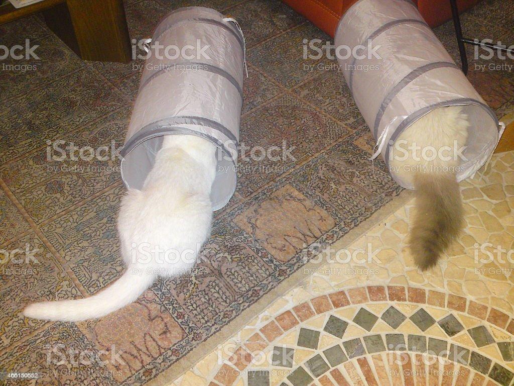 Wei?e Katze schaut in den Tunnel stock photo