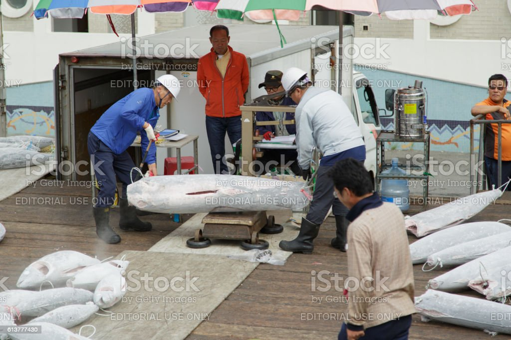 Weighing of hulks of a frozen tuna. stock photo