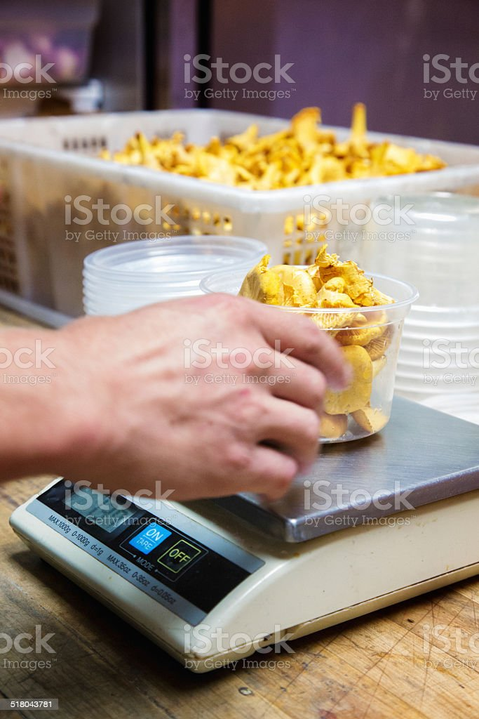 Weighing portions of chanterelles mushrooms stock photo