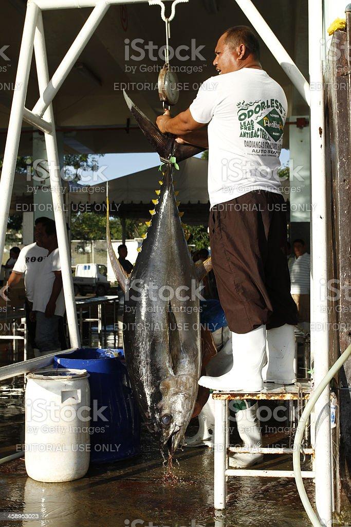 Weighing Tuna royalty-free stock photo